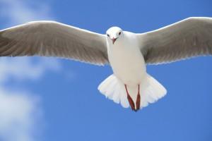 鳥の糞が直撃したら、保険は使える?