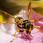 ハチに刺されたら、保険は使える?