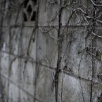 地震で塀やフェンス、門が倒壊した時、保険は使える?